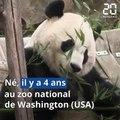 Le panda Bei Bei s'est envolé pour la Chine