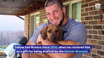 Tim Tebow Posts Heartbreaking Goodbye Video to His Dog