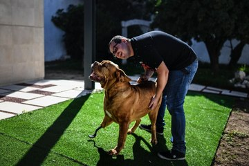 Ronda the dog gets new legs