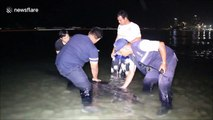 Injured whale rescued after washing up on beach in Thailand