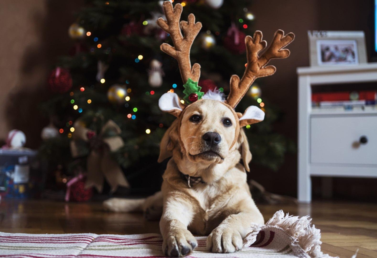 La Vérité Sur Le Sapin De Noël