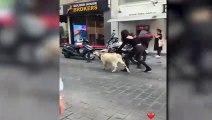 Zeynep Alkan, İstanbul Sokaklarında Keçiyle Gezdi