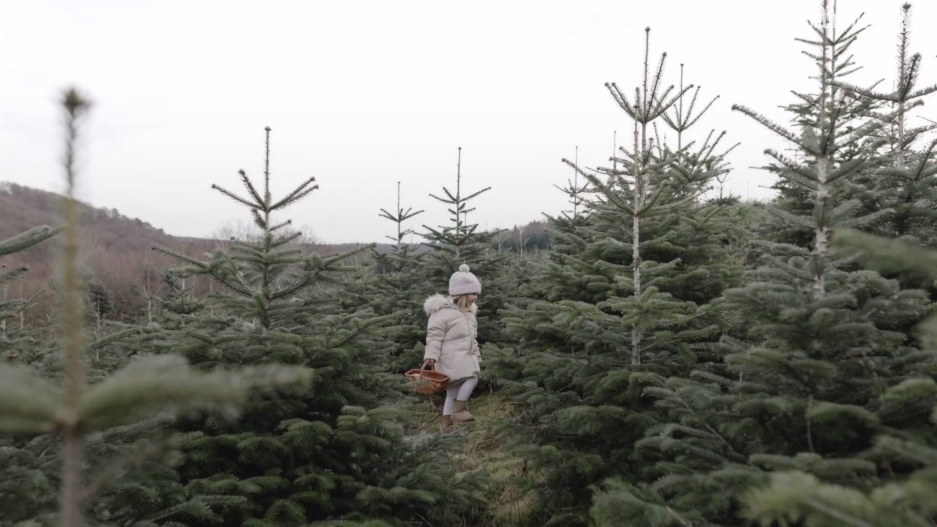 The South's Best Christmas Tree Farms