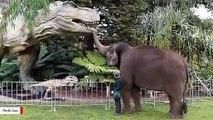 Watch How Elephants React To Dinosaurs