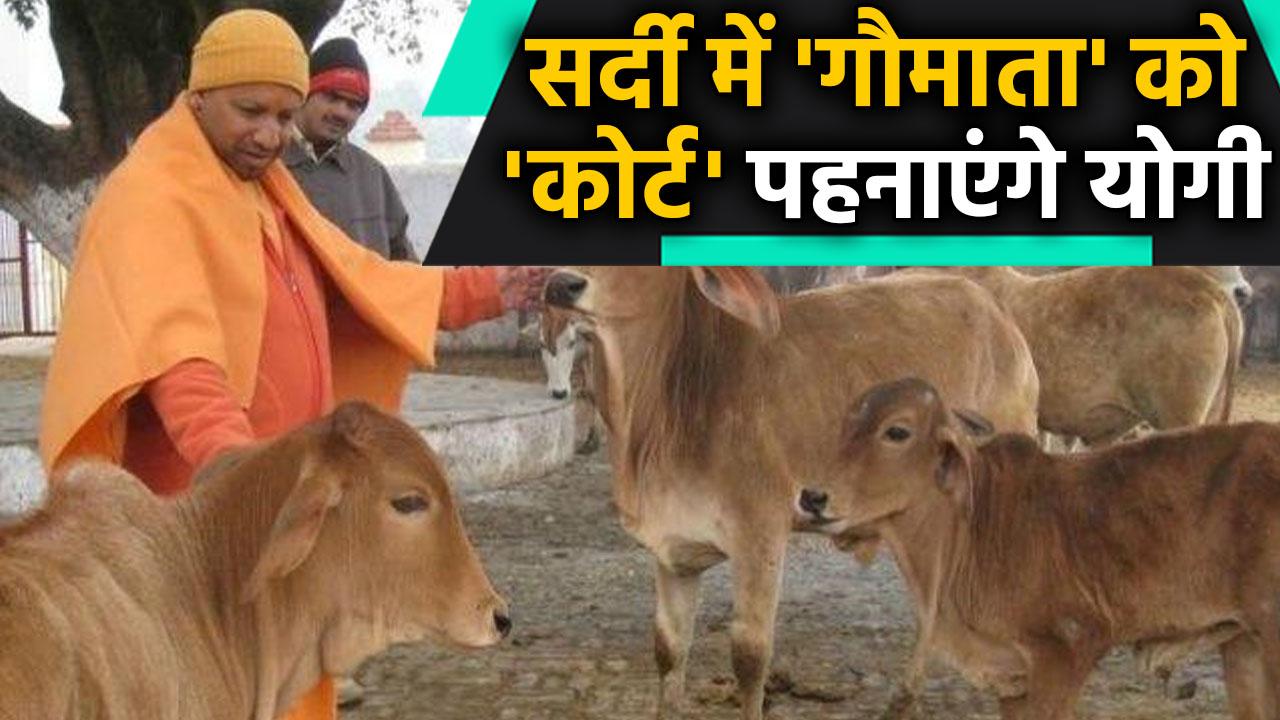 Uttar Pradesh: yogi govt getting jute coats stitched for cattle |वनइंडिया हिंदी