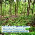 Une nouvelle forêt va pousser autour de Paris