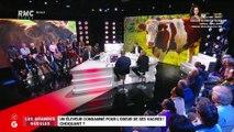 Un éleveur condamné pour l'odeur de ses vaches - 25/11