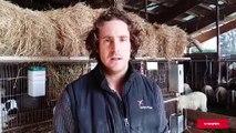 À Gillonnay, un bercail paysan pour les autistes