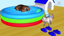 Learn Colors with Wrong Colors Sport Shoes with Animals Name and Sound