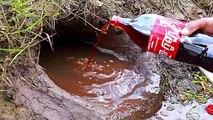 Pêcher des poissons avec du Coca Cola et des Mentos