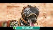 Novo capacete para os cães militares dos EUA