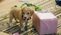 Holiday Scenics Puppies vs Kitties Trailer