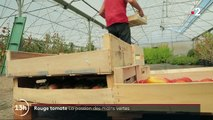 Feuilleton : Rouge tomate (2/5)