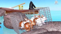 Learn Colors Learn Wild Animals Help Cage Farm Animals Baby Rabbit Drop Cartoon for Children