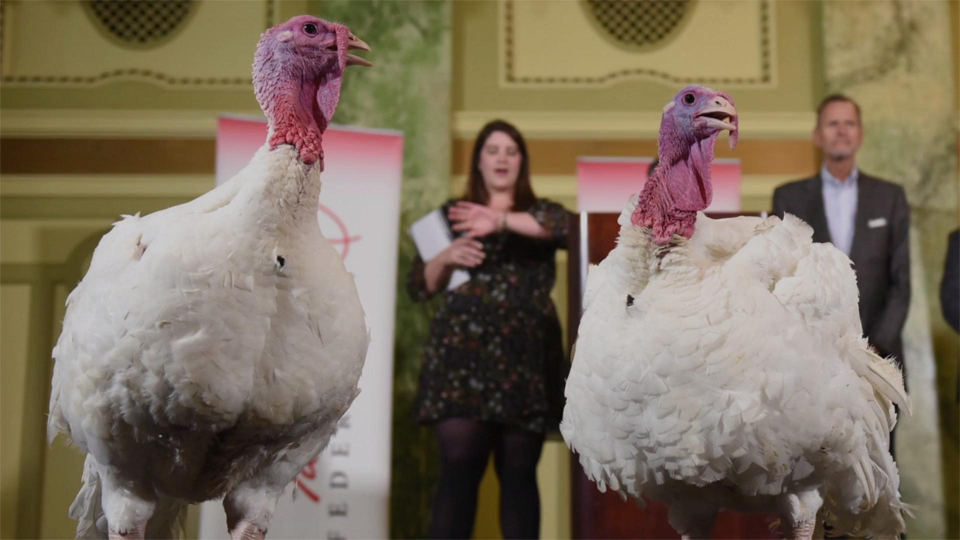 Meet Bread and Butter, the Two Lucky Turkeys Chosen for This Year's Thanksgiving Pardon