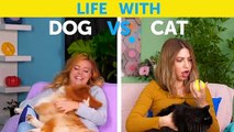 LIFE WITH DOG VS LIFE WITH CAT  Corgi life -- Relatable facts by Life For Tips