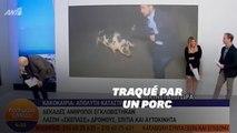Poursuivi par un porc, ce journaliste grec n'a pas pu faire son travail