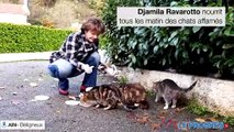Les bénévole pour «  Les chats et nous » nourrissent tous les matin des chats affamés