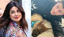 Priyanka Chopra Surprises Nick Jonas With New Puppy