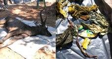 Sacs-poubelle, sous-vêtements etc... : un cerf sauvage retrouvé mort avec 7 kilos de déchets plastiques dans son estomac en Thaïlande
