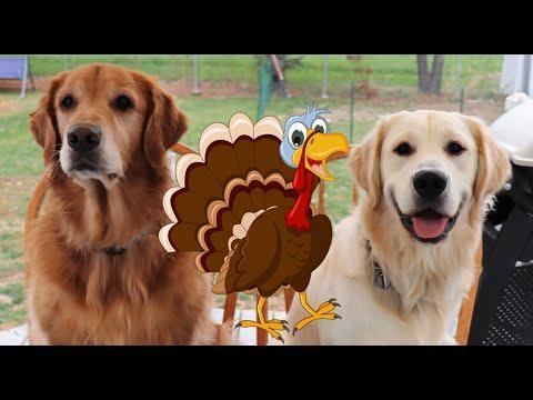 Dogs Rip Apart Fake Turkeys In Yard