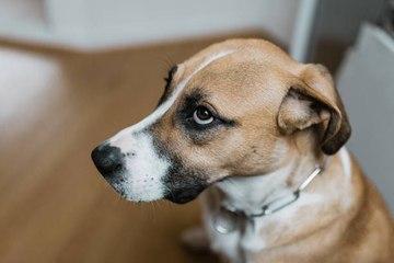 Gritarle a tu perro puede tener efectos negativos en él