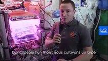 Ask Our Astronaut | Quelles plantes comestibles poussent le mieux dans l'ISS ?