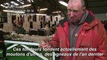 Malouines : de l'île aux moutons au tourisme vert