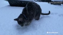 Cats may not like water, but snow is a different story
