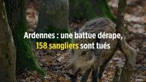 Ardennes : une battue dérape, 158 sangliers sont tués