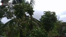 #TisoyPH brings strong winds to Bicol region