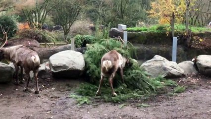 Playing Reindeer Games with Trees