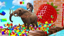 Learn fruits and Animals with funny Monkey style PC games