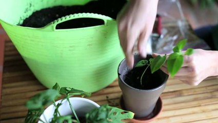 Simple cuttings for more plants