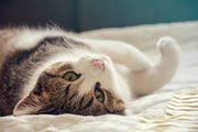 Science confirms it: Cats are hard to read