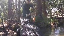Il joue avec un énorme crocodile... belle bête