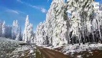 Figée par le froid et la neige, cette forêt ne bouge plus !