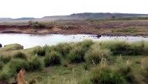 Un zèbre traverse la rivière mais n'a pas vu ce qui l'attendait sur l'autre rive