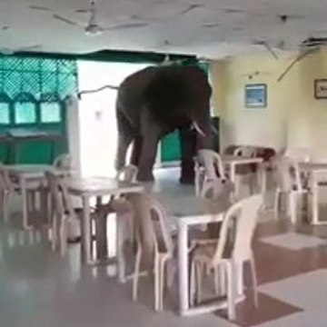 Viral video : Elephant walks into hasimara Army Canteen in Bengal
