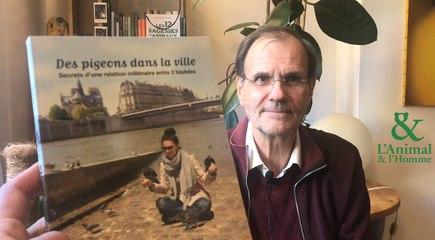 Interview 1 de Didier Lapostre : pigeons, pourquoi tant de haine?