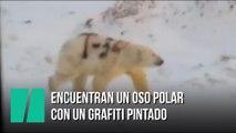 Encuentran un animal con un grafiti pintado