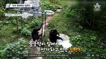 '쓱쓱' 빨래하는 침팬지