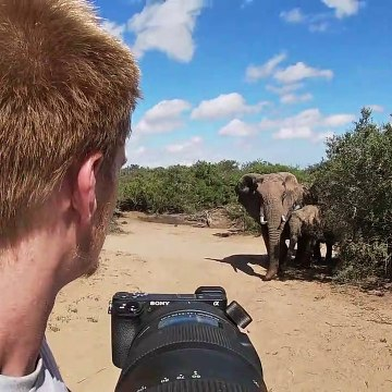 Wildlife photographer captures his closest encounter yet - with a gentle elephant herd in South Africa