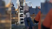 Video Shows Great White Shark Called Ironbound Getting Tagged By Scientists