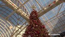 Everything's bigger in Texas, even the Christmas trees