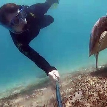 Snorkeler films magical encounter with turtle in Australian waters