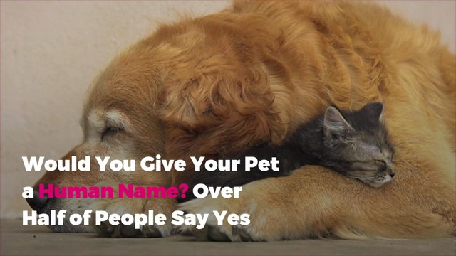 Would You Give Your Pet a Human Name? Over Half of People Say Yes