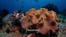 MALDIVES Top 50 Tourist Places   Maldives Tourism