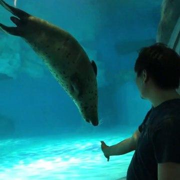 Playing with real sea lion following my hand ocean park hong kong 與海豹互動香港海洋公園