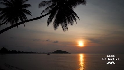 Calm Collective - Tropical Beach